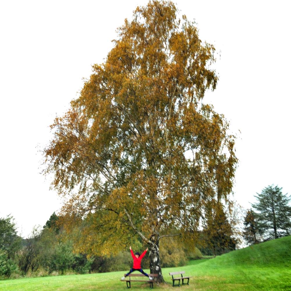 Sjekk ut det kuleste treet nedenfor Oseberghaugen